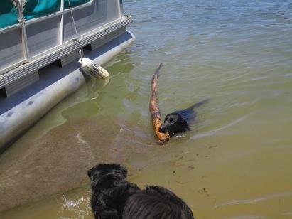 Loki bringing in the biggest stick ever