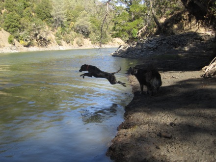 Kona takign a leap after the stick. Or pine cone. Who knows?!